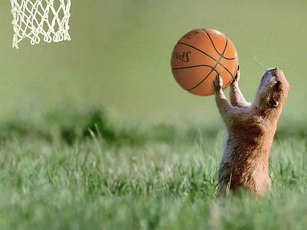 Веселый баскетбол